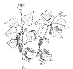 piante 6