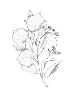 piante 17